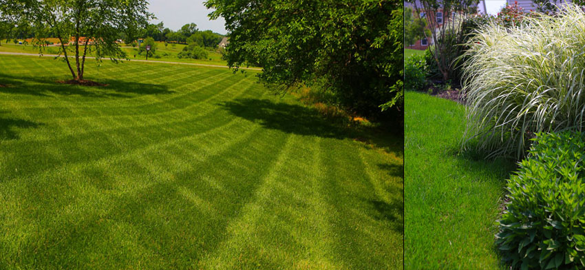 New Lawn Installation and Sodding in Loudoun ...