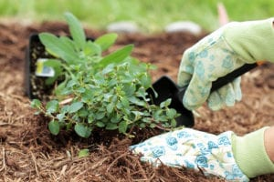 Spring Mulching and Planting