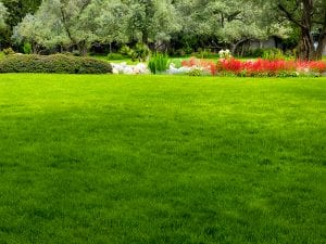 When is the Best Time to Fertilize?
