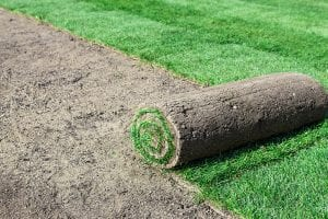 What Type of Lawn Installation is Best?