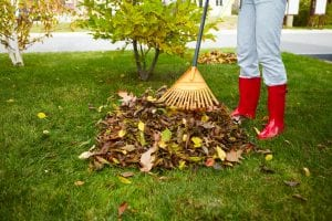 Do I Really Have to Rake My Leaves?