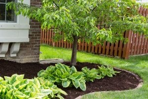 weeding mulch bed
